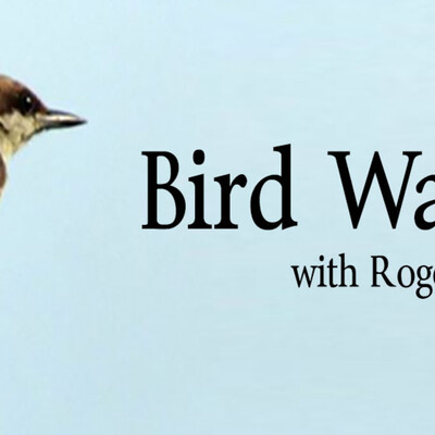 Bird Watch with Roger Taylor