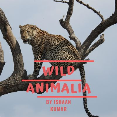 Wild Animalia