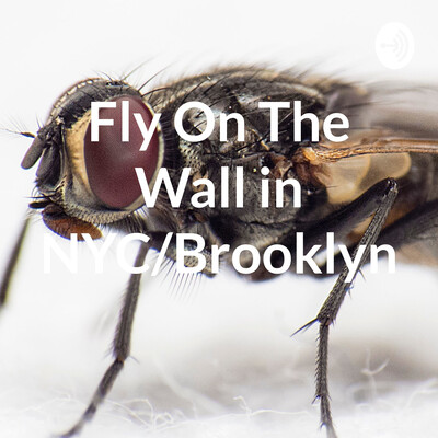 Fly By The Wall in NYC/Brooklyn