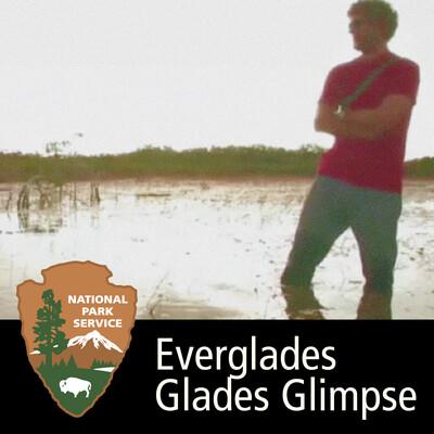 Everglades - Glades Glimpse