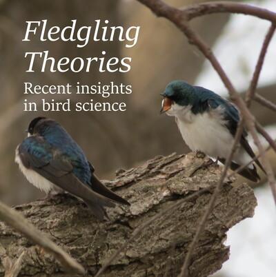 Fledgling Theories