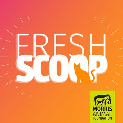 Fresh Scoop