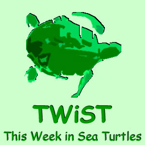 This Week in Sea Turtles