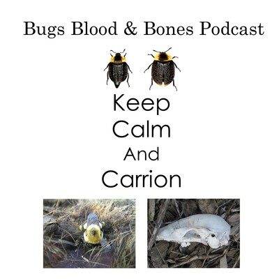 Bugs Blood and Bones