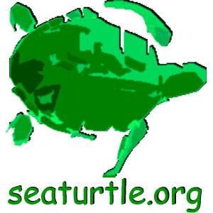 Sea Turtle Multimedia Guide