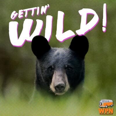 Gettin' Wild