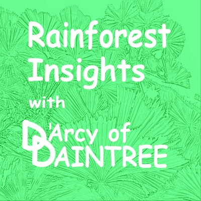 Rainforest Insights with DArcy of Daintree