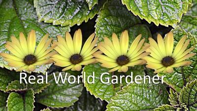 Real World Gardener Podcasts