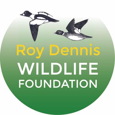 Roy Dennis Wildlife Foundation: hands-on conservation