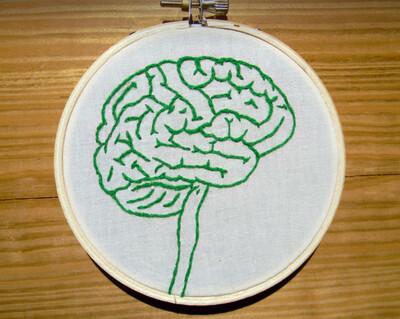 Explain the Brain