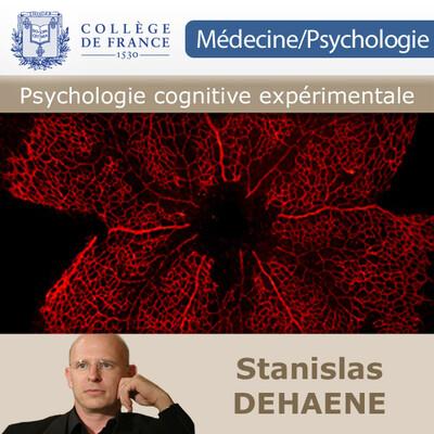 04 - L'influence du langage et des symboles sur la perception et la cognition - VIDEO