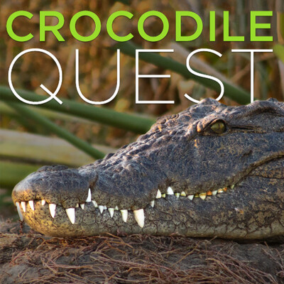Crocodile Quest (HD)