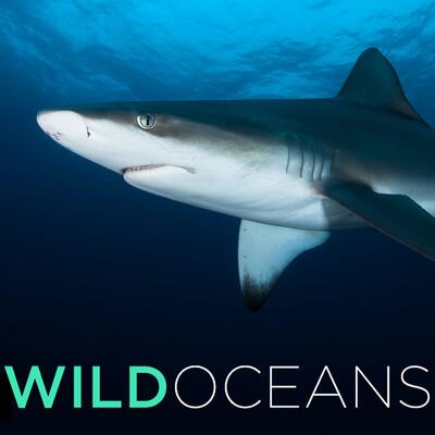 Wild Oceans (HD)