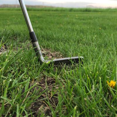 Dear Golf, Thank you