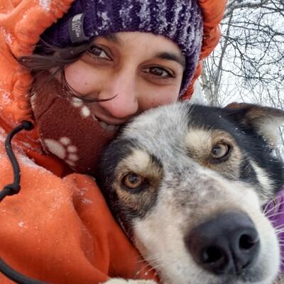 Sled Dog Podcast