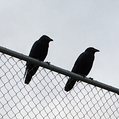 Two Crows Podcast