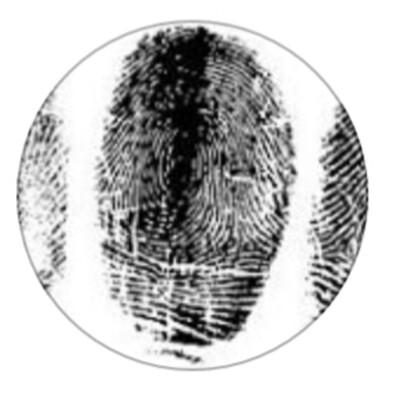 CA True Crime Podcast