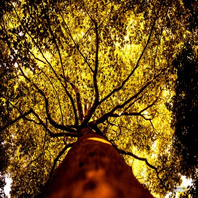 The Tree Podcast