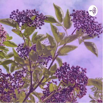 Elderberry epoch