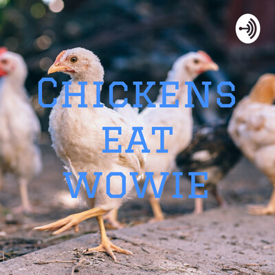 Chickens eat wowie