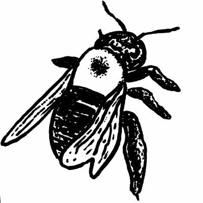Pet Bee