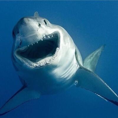 Sharkcast