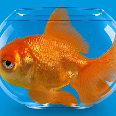 Fish Gutz