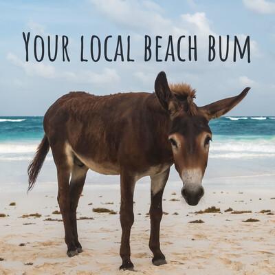 Your local beach bum