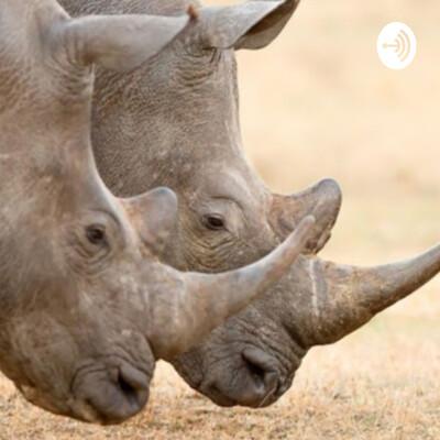 Porn Rhinos