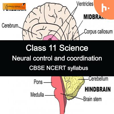 Theory part   CBSE   Class 11   Biology   Neural Control and Coordination