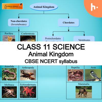 Theory part 2 | CBSE | Class 11 | Biology | Animal Kingdom