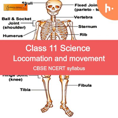 Questions Set | CBSE | Class 11 | Biology | Locomotion and Movement
