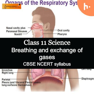 Theory part | CBSE | Class 11 | Biology | Breathing and Exchange of Gases
