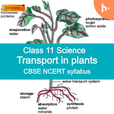 Theory part 2   CBSE   Class 11   Biology   Transport in Plants