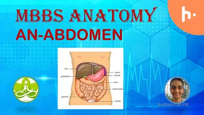MBBS Anatomy Abdomen