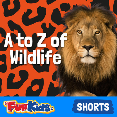 A to Z of Wildlife for Kids