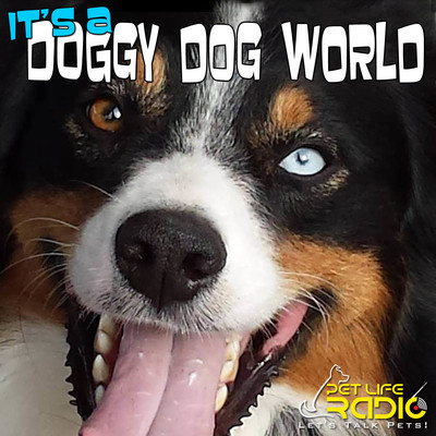 It's A Doggy Dog World - All about dogs as pets & caring for your pet dog, - Pets & Animals on Pet Life Radio (PetLifeRadio.com)