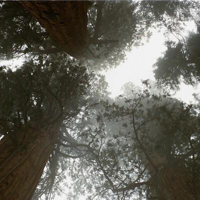 Redwood Christian Fellowship - Sermons
