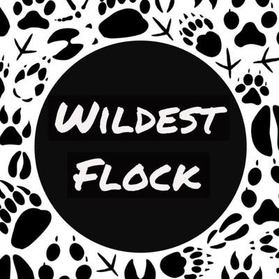 Wildest Flock