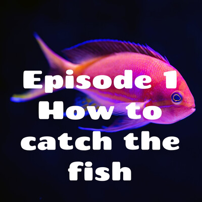 Episode 1 What to use to catch the fish