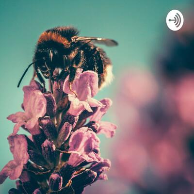 Rusty bumblebee