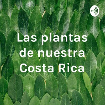 Las plantas de nuestra Costa Rica