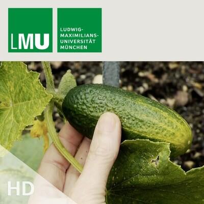 Where the wild veggies are - HD