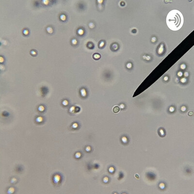 Yeast Reproduction Lab