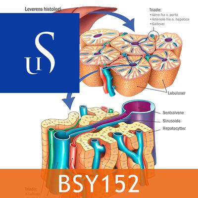 BSY152 - Sykepleiens naturvitenskapelige og medisinske grunnlag