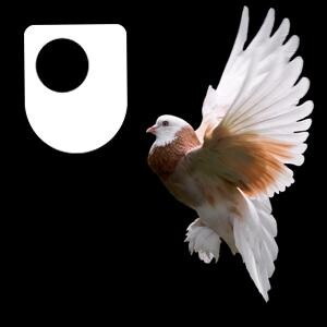 Publishing The Origin of Species - for iPad/Mac/PC